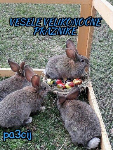 Čisto pravi velikonočni zajčki
