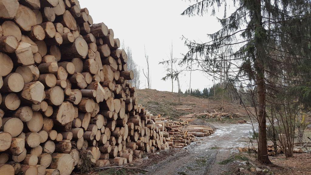 Predstavitve gozdarskih razpisov