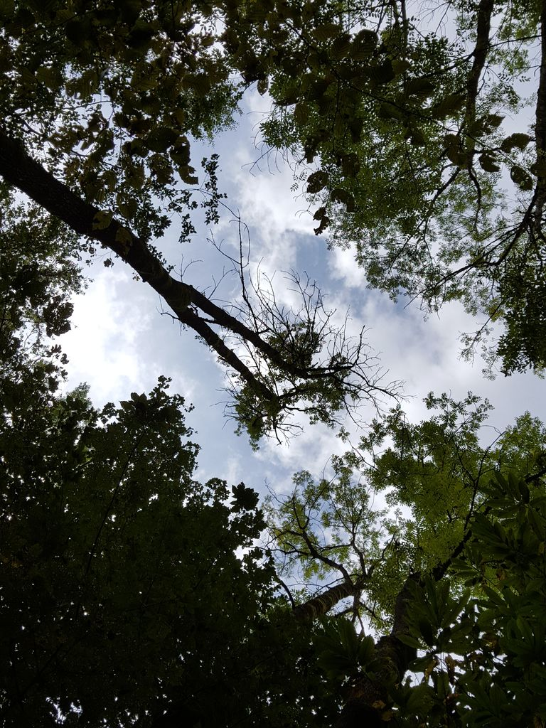 Odstranjevanje bolnih dreves na Bledu