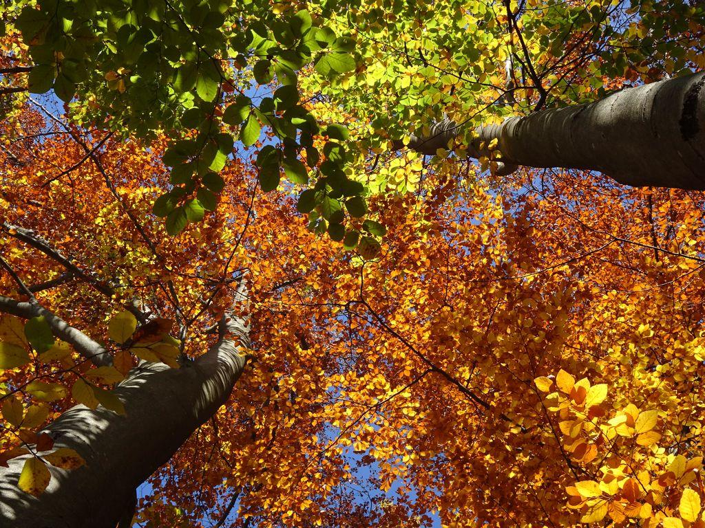 Razstava: Mogočna drevesa v blejskih parkih