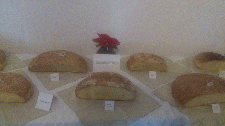 6. ocenjevanje kruha in drugih krušnih izdelkov