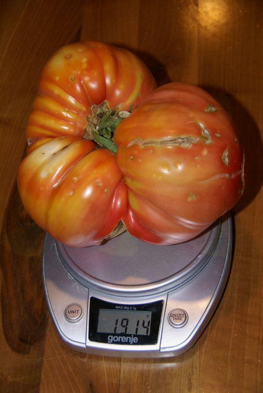 Pomidor rekorder