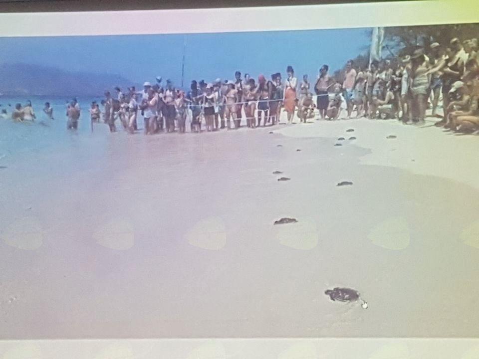 Opazovanje morskih želv je nekaj res neprecenljivega, foto Anja Stajnko