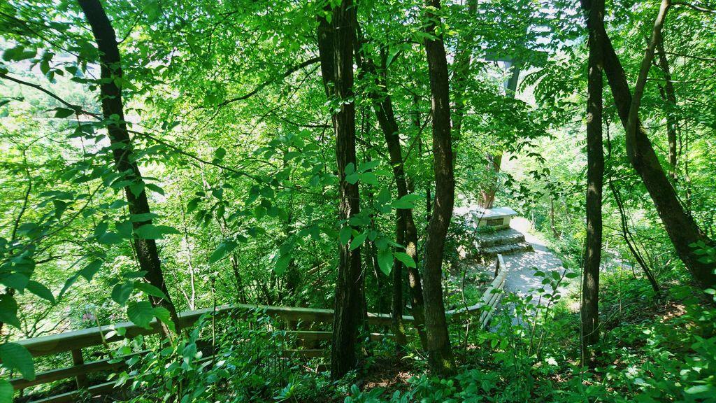 Na strmih obronkih je trim steza zavarovana z novo varovalno ograjo