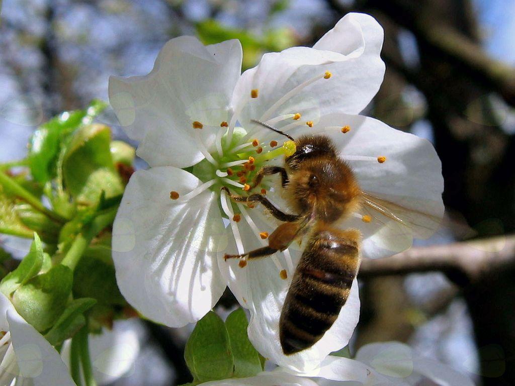 Sadjarstvo in čebelarstvo