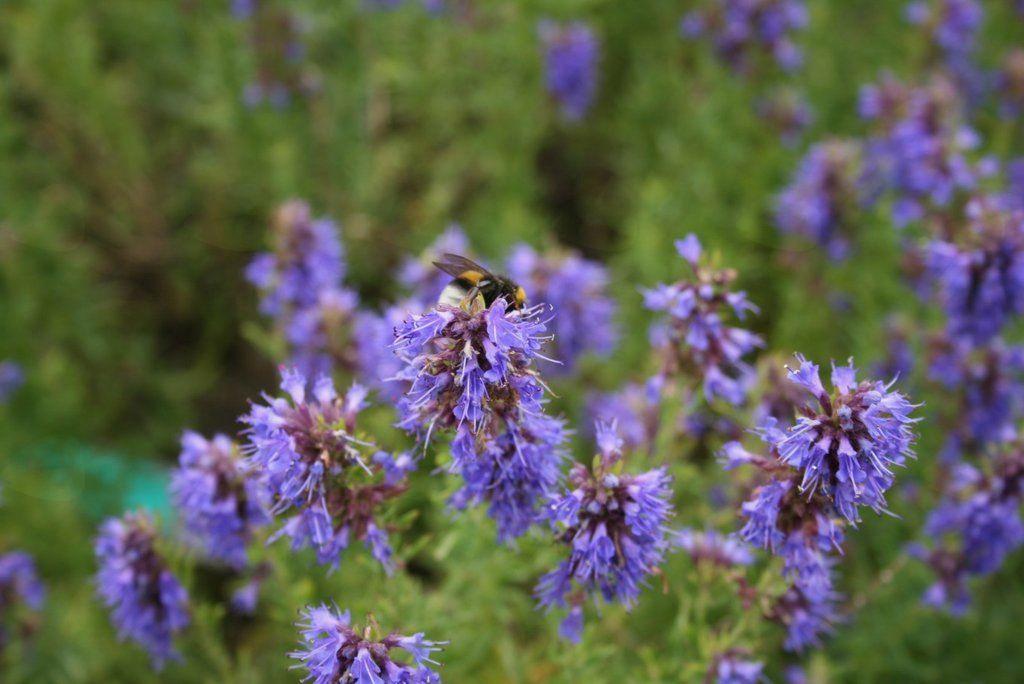 Oblikovanje medovitega vrta 2. del