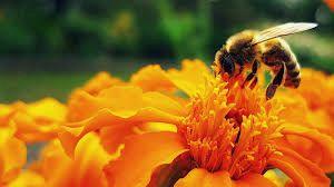 Oblikovanje medovitega vrta 1. del
