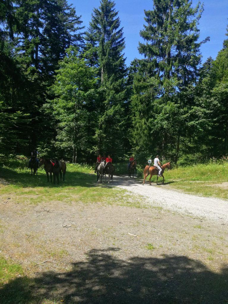 Mirnopeška konjenica na Mirni gori