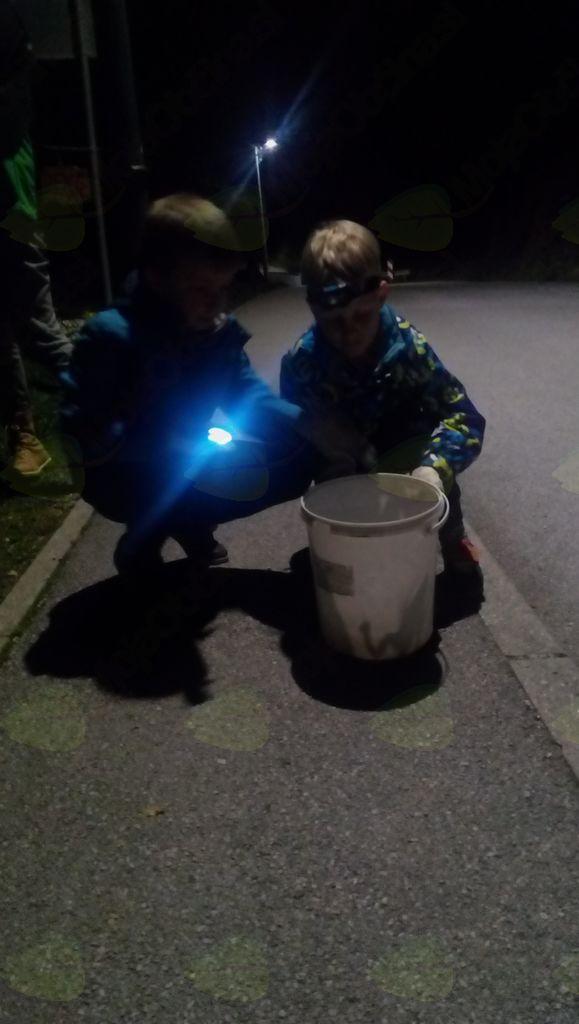 Reševanje žab