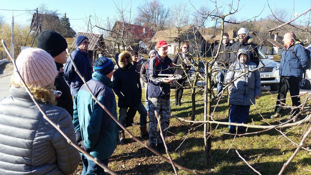 Strokovni prikaz obrezovanja sadnega drevja na Dobenu