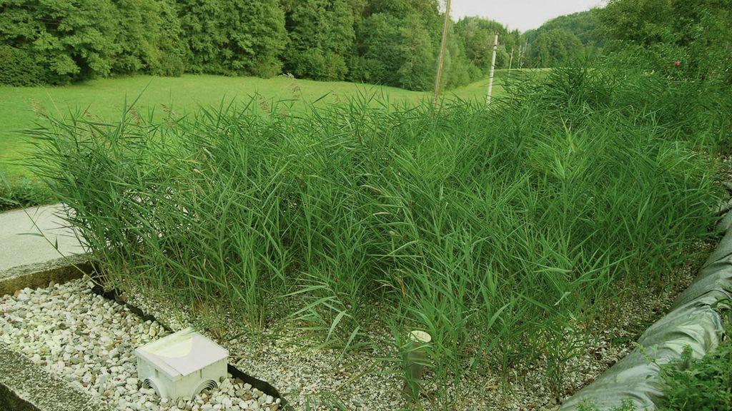 Male komunalne rastlinske čistilne naprave - strokovno predavanje