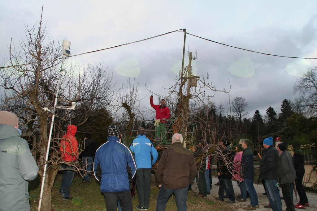 Pravilna rez sadnega drevja zagotavlja dobro rast in rodnost drevesa