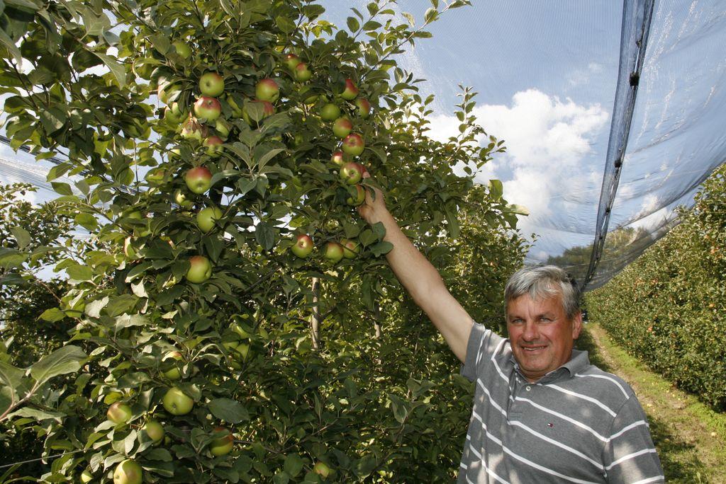 Po jabolka v Trnovče
