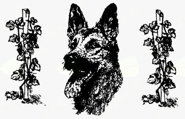 19. občinski praznik - Turnir šolanih psov