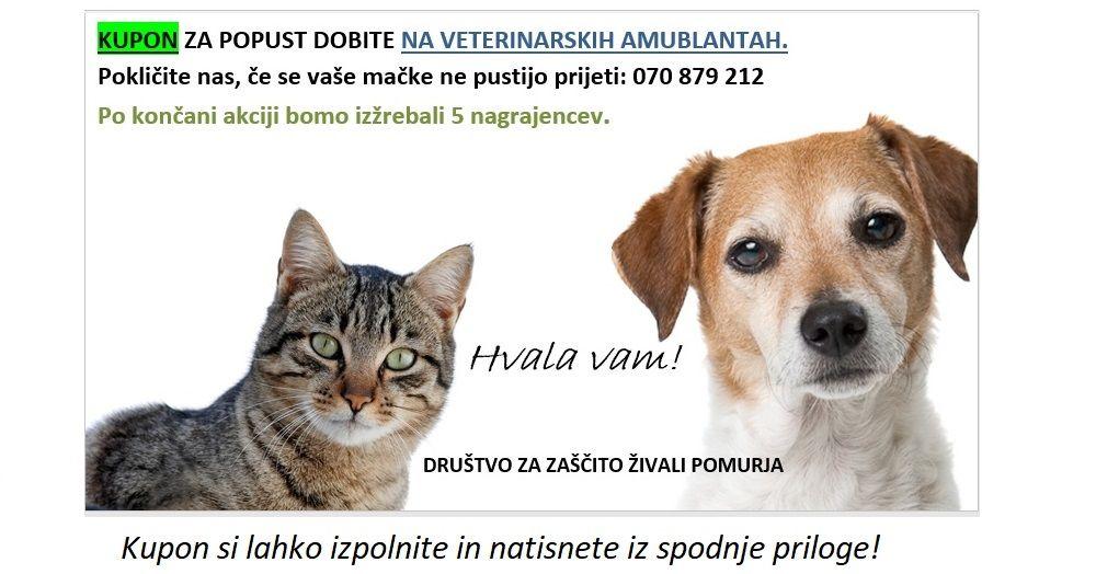 AKCIJA STERILIZACIJ / KASTRACIJ PSOV IN MAČK  od 1. 9. do 31. 10. 2020