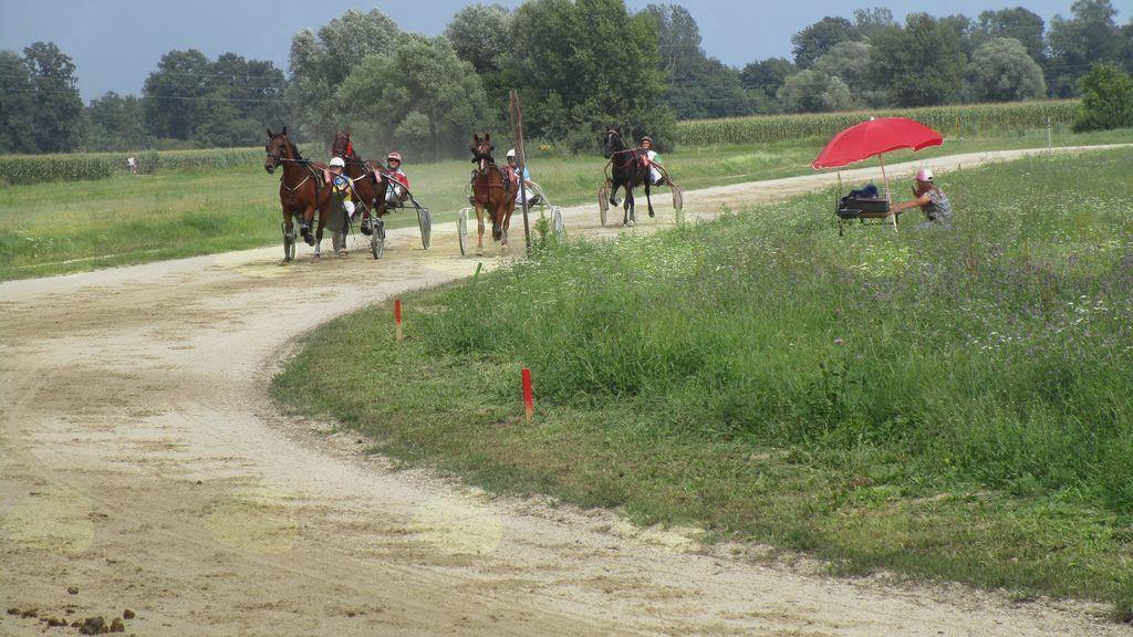 Kasaške dirke v Križevcih