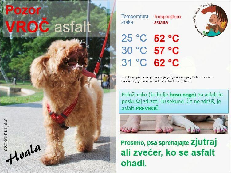 Tudi živalim je vroče!