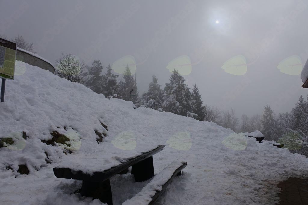 IZLET NA GORO OLJKO (733 m)