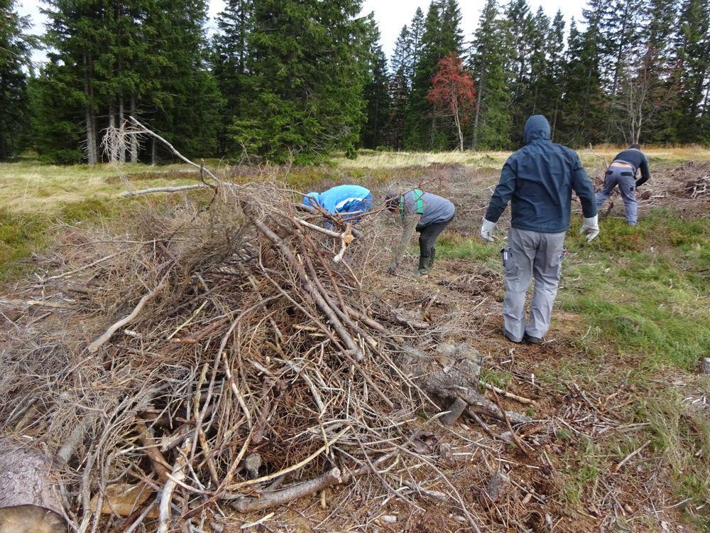 Čiščenje pohorskih planj 2020