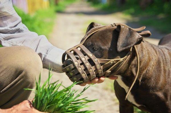 Pravilno ravnanje z nevarnimi psi (foto_splet)