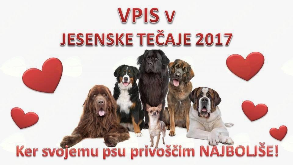 Vpis v jesenske tečaje šolanja psov ŠKD Ljutomer-Križevci