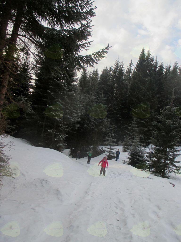 FOTOREPORTAŽA : Mladinski odsek PD Podpeč Preserje na Javorovem vrhu 20.1.2018