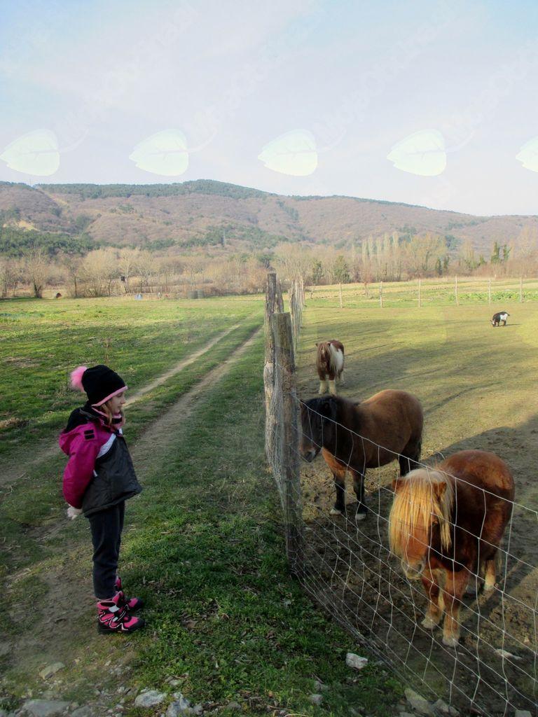 FOTOREPORTAŽA : Mladinski odsek PD Podpeč Preserje na Socerbu 17.2.2018