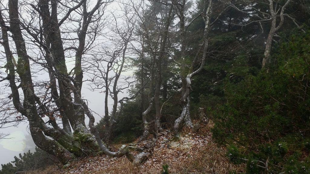 FOTOREPORTAŽA :  PD na Cjanovci 18.11.2018