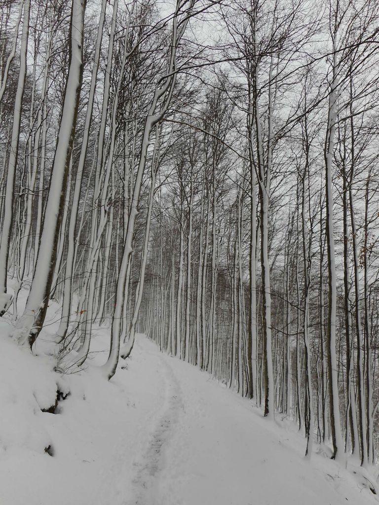FOTOREPORTAŽA : PD na Snežniku  9. 12. 2018
