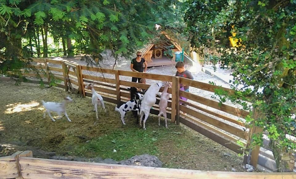 Domači živalski vrt so postavili za najmlajše, da lahko v živo vidijo domače živali in jih nakrmijo