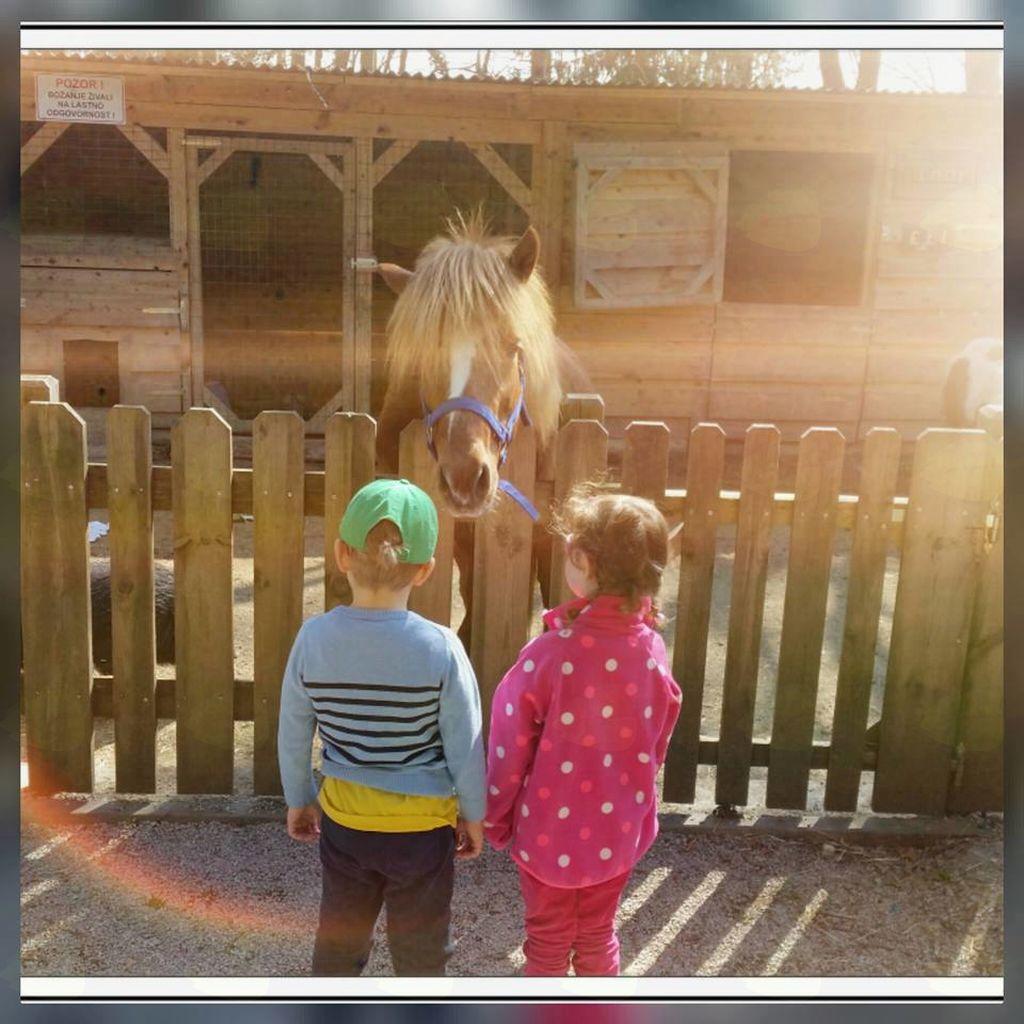 Za obiskovalce, tudi starejše ne samo otroke, je zanimiv tudi konjski hlev, ki je bil prav tako obnovljen