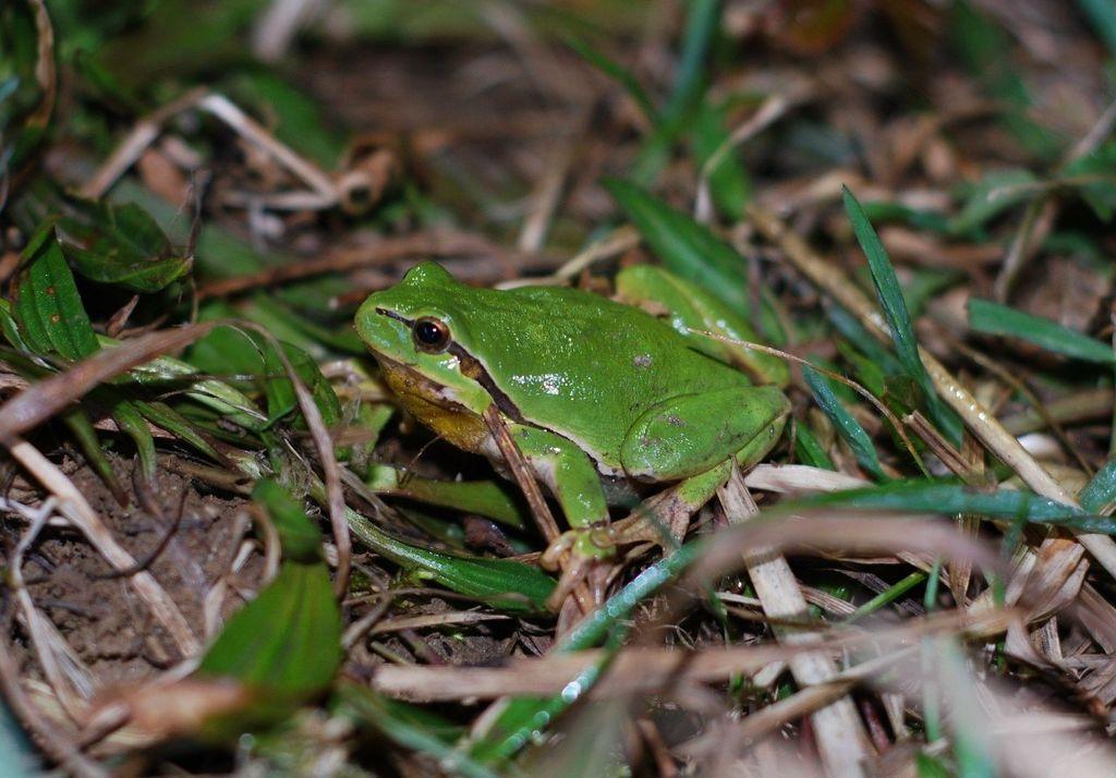 Spomladi se iz gozda preko ceste Mengeš - Koseze odpravi več 1.000 osebkov različnih vrst dvoživk, krastače, rjave žabe, zelene žabe in pupki, do mrestišča - Phliškega bajerja.
