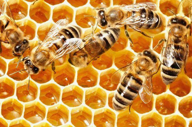 Prikaz točenja medu