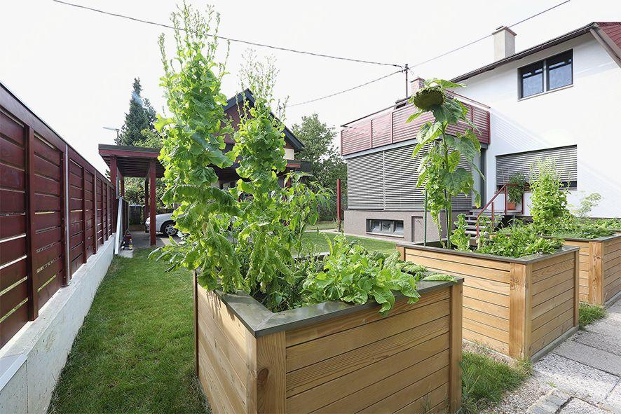 Pozneje: visoke grede so ločnica med sosednjima parcelama in 80 cm višje od polžev, zmrzali in plevela.