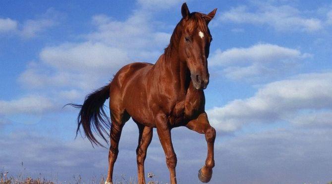 Blagoslov konjev Radenske konjenice