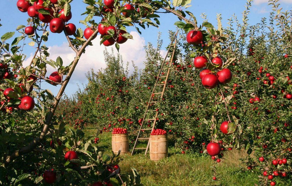 Predavanje Osnove sistema HACCP in pravila glede označevanja živil
