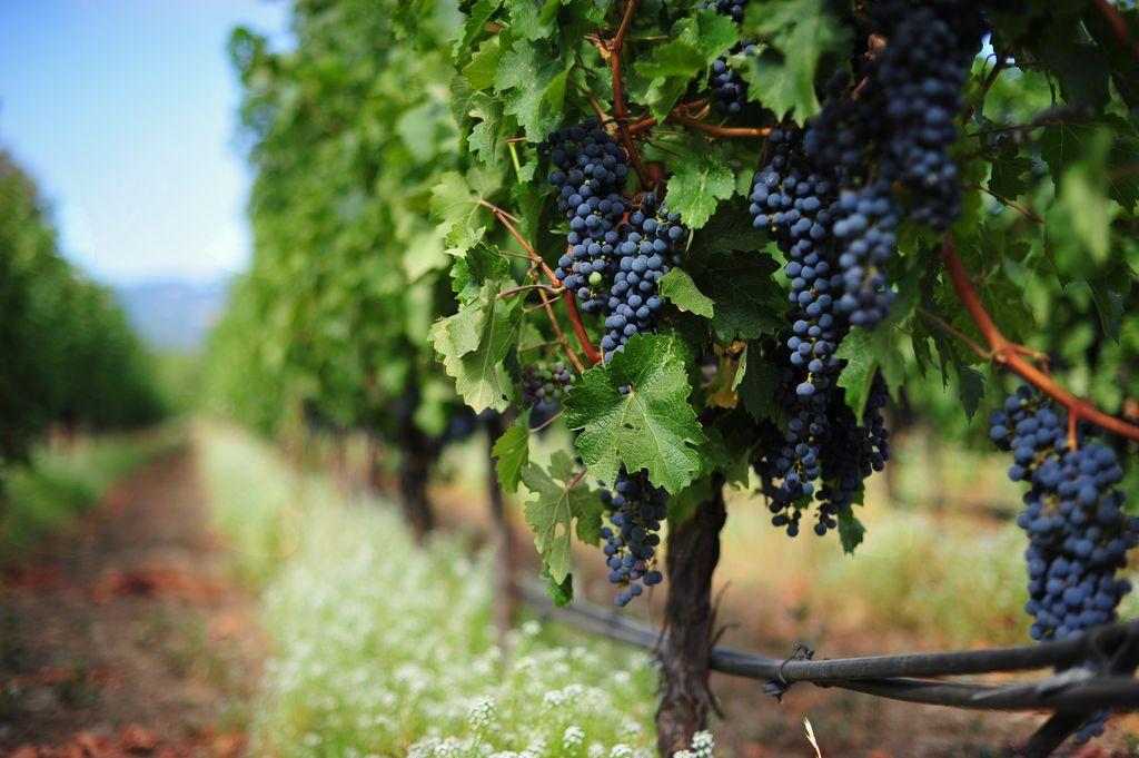 Teoretična in praktična učna delavnica: Predelava grozdja (mošta) v sok