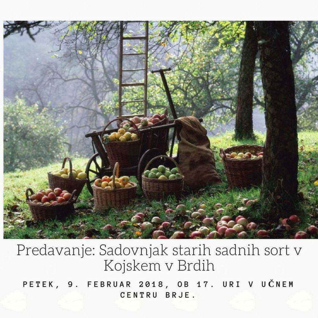 Predavanje: Sadovnjak starih sadnih sort v Kojskem v Brdih