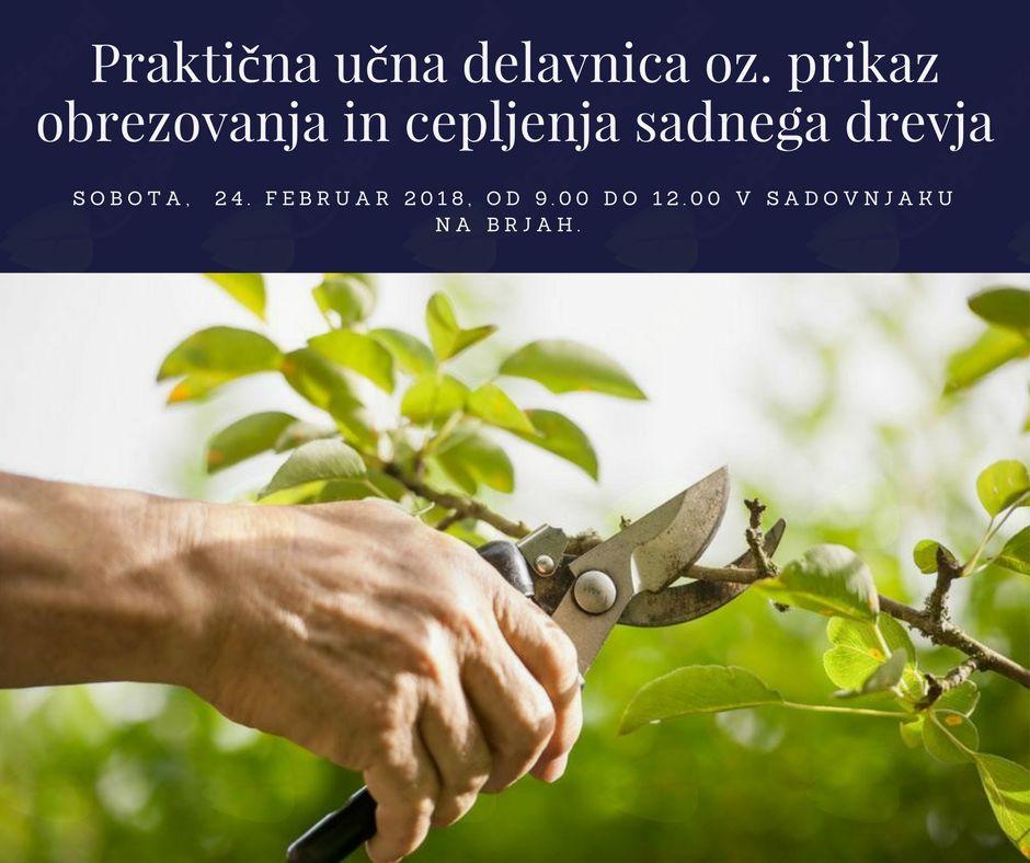 Praktična učna delavnica oz. prikaz obrezovanja in cepljenja sadnega drevja