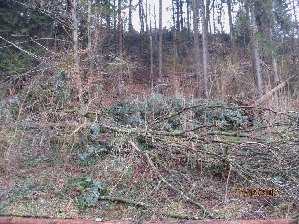 Povabilo lastnikom gozdov za sanacijo po vetrolomu