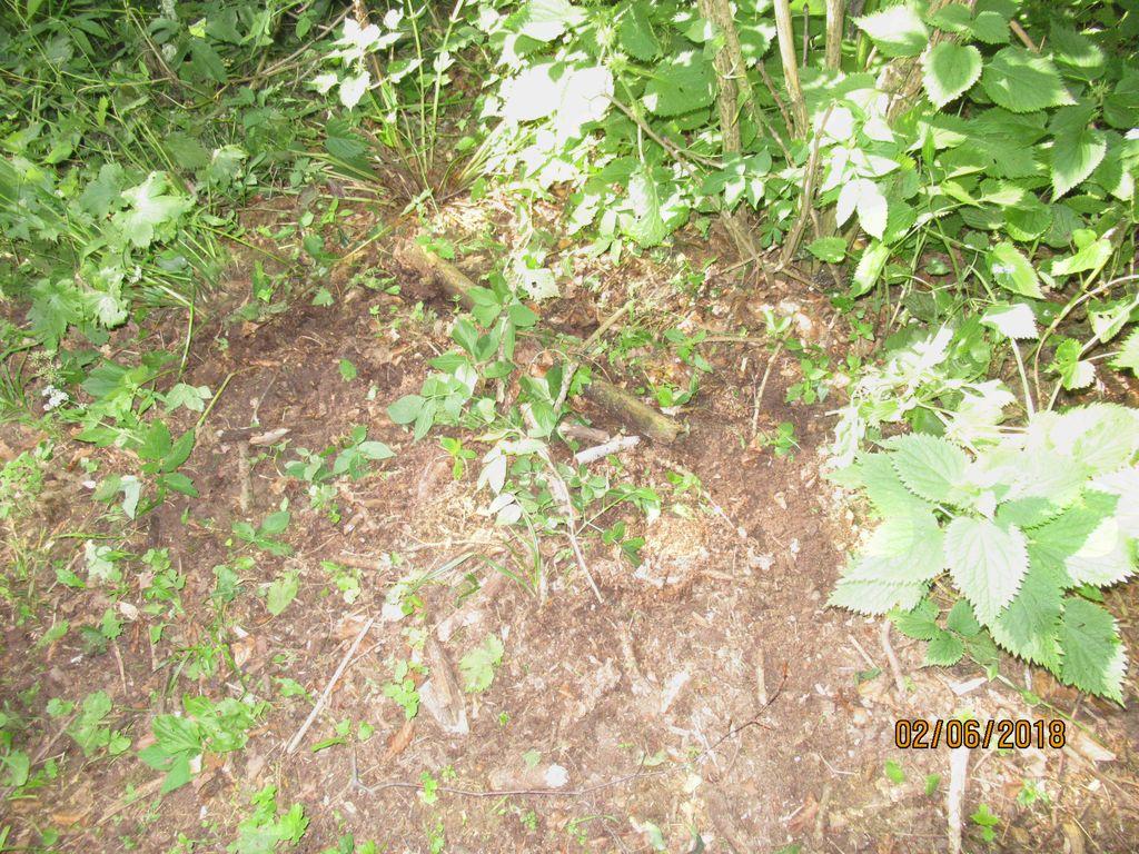 Na tleh so vidni odtisi medvedjih krempljev.