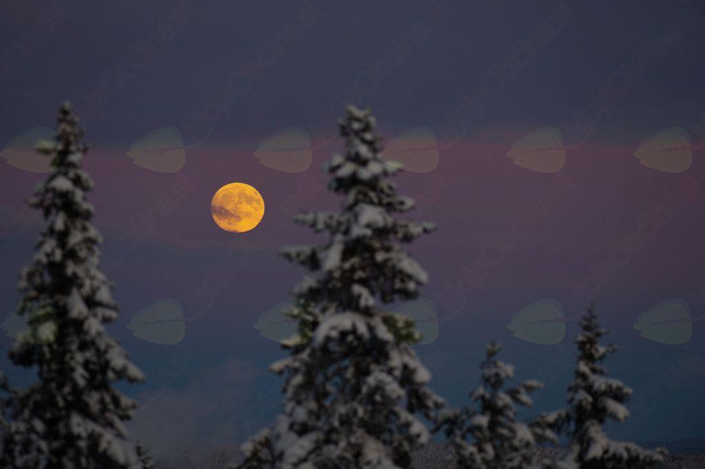 Tradicionalno ponovoletni nočni pohod na Trstelj ob Polni volčji luni