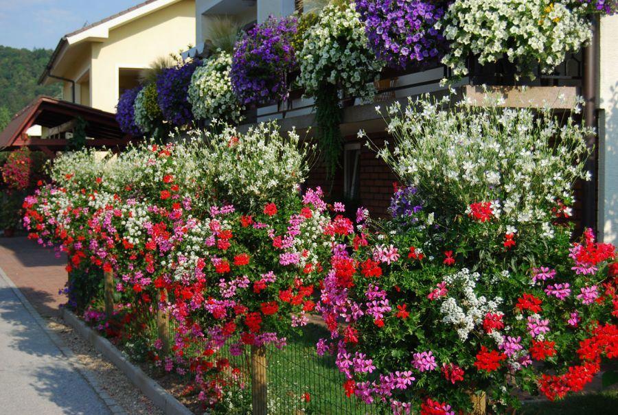 Cvetlični sejem v Zrečah