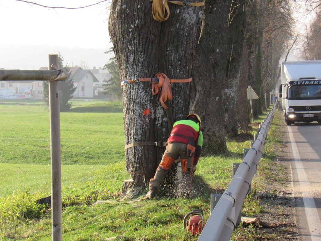Sanacija stanja lip v Napoleonovem drevoredu v Logatcu septembra in novembra 2020