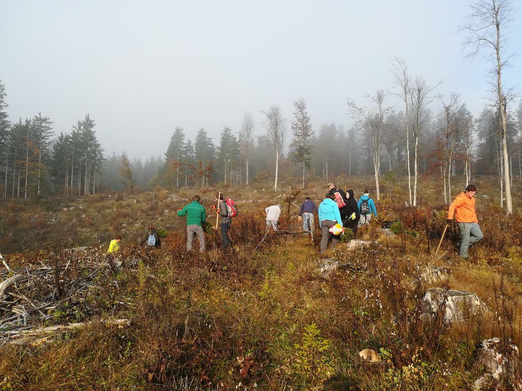 Akcija pogozdovanja v Logatcu - Pomladimo gozdove 2019