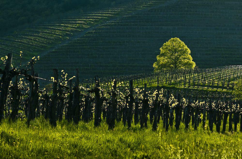 Pokrajina Vipavska dolina. Foto: Marijan Močivnik