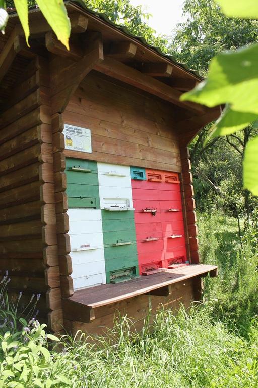 Šolski čebelnjak v Dobravljah, foto Bogdan Bone