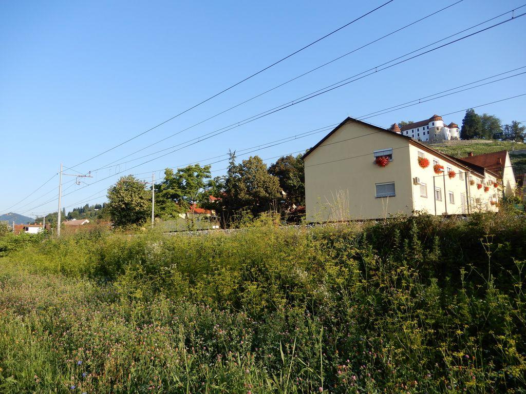 Ambrozija ob železniški progi pri občinski stavbi