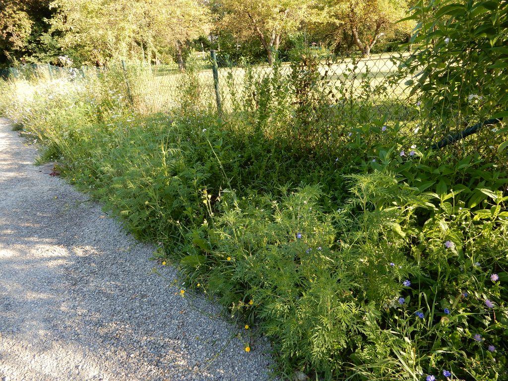 Pot ob Savi pri vrtovih v bližini Stillesa