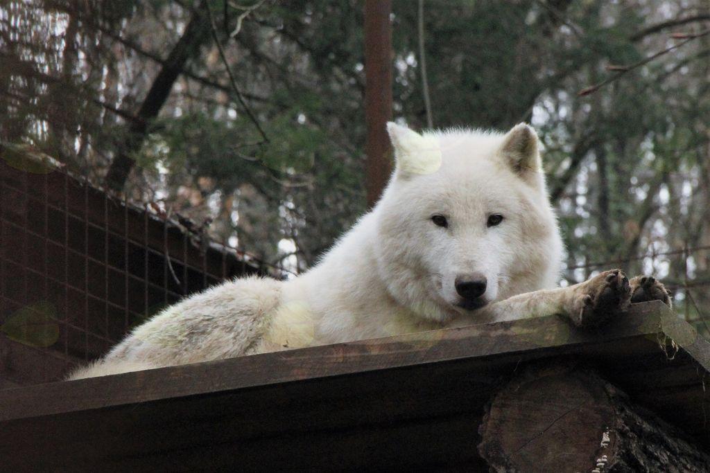 Zoo park Rožman praznuje 10 let